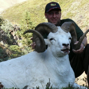 Dall Sheep Hunts